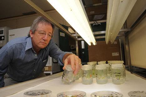 Genetically engineered 'plantibodies' to halt Ebola ? | IDM News | Scoop.it