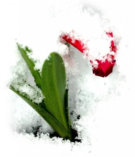 Mon jardin d'hiver | Les colocs du jardin | Scoop.it