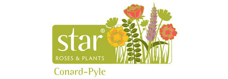 Star® Roses and Plants/Conard-Pyle Announce 2014 Perennial Introductions | Annie Haven | Haven Brand | Scoop.it