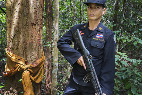 "On the Frontlines of Thailand's ""Blood Wood"" War 
