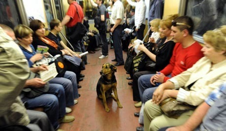 Stray Dogs Master Moscow Subway | World Photography | Scoop.it