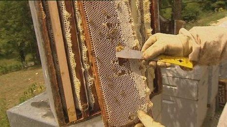 Canicule : les abeilles se lèchent les babines, les apiculteurs aussi - France 3 Franche-Comté | apiculture 2.0 | Scoop.it