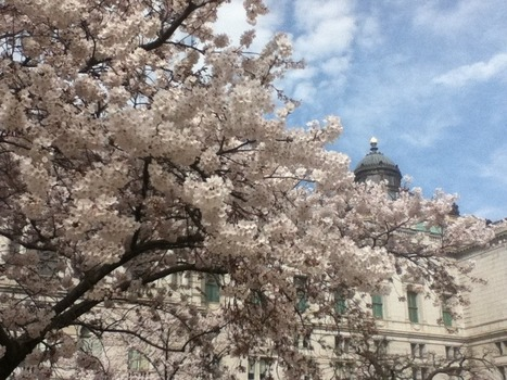 Cherry Blossoms at the Library of Congress – Pic of the Week « In Custodia Legis: Law Librarians of Congress | Library Collaboration | Scoop.it