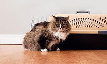 Behavioral Problems: Animal Planet | cats & dogs! | Scoop.it