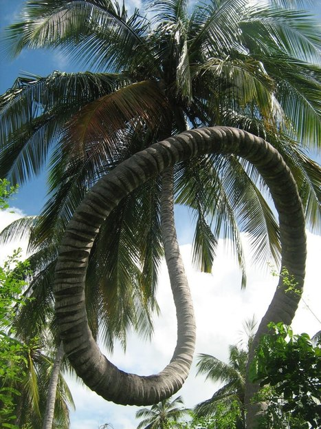 Welcome To Tanzania: The Rolling Coconut Tree At Chole Island | Harmony Nature | Scoop.it