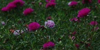 Himalayan Flowers Shed Light on Climate Change - Climate Himalaya   Hanifl Centre- Outdoor Education in the Himalaya   Scoop.it