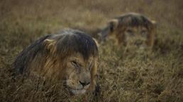 En fotos: las mejores imágenes de la naturaleza en 2013 - BBC Mundo - Video y Fotos | Naturaleza | Scoop.it