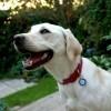 Rehoming A Rescue Dog - Matt Blank's Blog   Animal Cruelty   Scoop.it