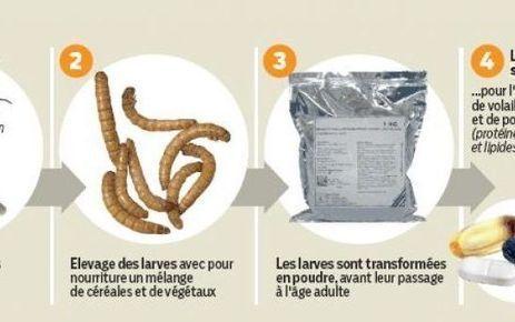 Une usine d'insectes pour nourrir les animaux d'élevage à Evry   Information Technologies for Agriculture   Scoop.it