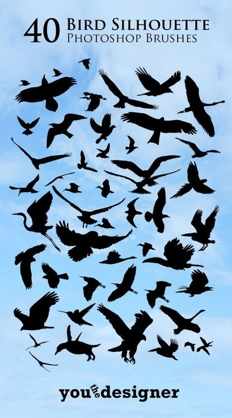 Download 40 Bird Silhouette Photoshop Brushes   The Official Photoshop Roadmap Journal   Scoop.it