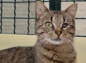 Adoptez un animal - Animaux Alma, Cannelle et les autres... - Bien Public   FIV&PMA   Scoop.it