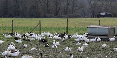 Crise aviaire en Dordogne : « On voit le bout du tunnel » | Agriculture en Dordogne | Scoop.it