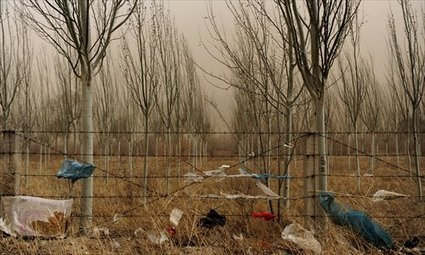 Death of Beijing's dust shield - Global Times   Unit 4 geog desertification   Scoop.it