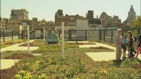 PS 41 Unveils Green Roof - NY1.com | Sustainable Urban Agriculture | Scoop.it