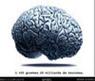 Notre cerveau est neurosocial! - Cent Papiers | Le meilleur de vous | Scoop.it
