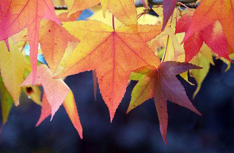 10 raisons de se réjouir du retour de l'automne | Remue-méninges FLE | Scoop.it