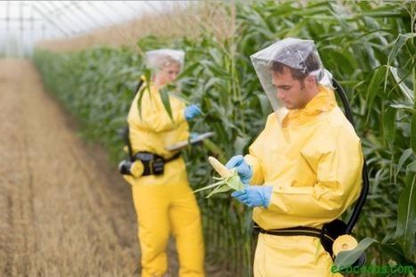 Científicos piden que se suspenda el uso de transgénicos en todo el Mundo | Ecocosas | Alimentos y Tecnología | Scoop.it