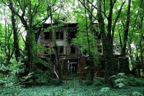 Insolite : North Brother Island l'ile abandonnée au coeur de New York | Topos Urbanisme | Scoop.it