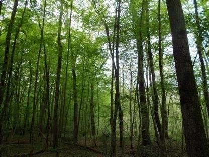 Vic Bilh : les propriétaires de forêt ont désormais leur association   Interprofession Forêt Bois des Pyrénées-Atlantiques   Scoop.it