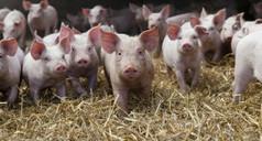 Antibiorésistance, le revers des antibiotiques | Toxique, soyons vigilant ! | Scoop.it