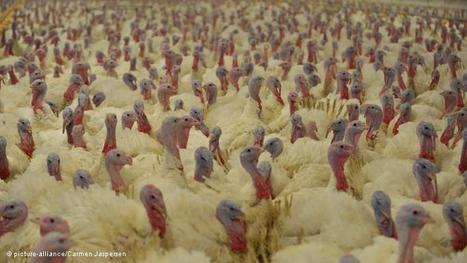 Experts link food security to greener farming   Environment & Development   Deutsche Welle   14.10.2011   Food issues   Scoop.it
