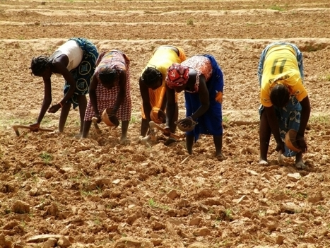 Analysis: Short-term fixes - the bane of West African agriculture | ReliefWeb | Agricultural & Horticultural Industry News | Scoop.it