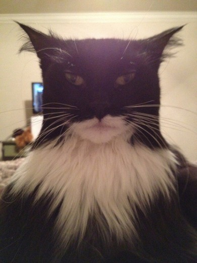 Il gatto che sembra Batman - Repubblica.it | Blonde Sans Filtre, c'est tout moi | Scoop.it
