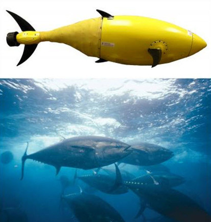 Homeland Security Funds Development of Robotic Tuna to Help Protect America | leapmind | Scoop.it