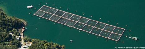 WWF - Aquaculture - Why it matters | Aquaculture | Scoop.it