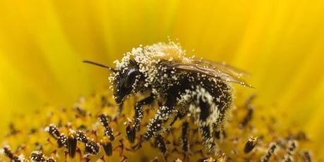 Quand Londres défend à tort des produits tueurs d'abeilles   développement durable : quel avenir voulons-nous ?   Scoop.it