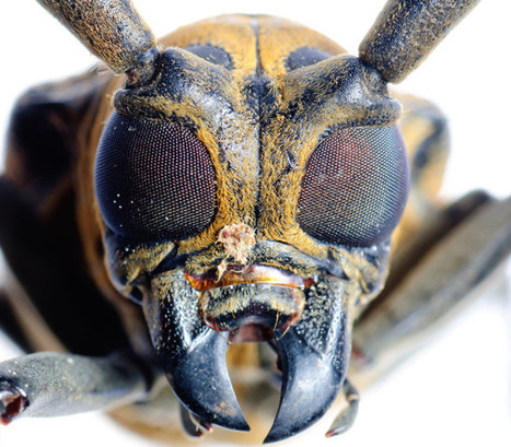 Insect Nervous System Copied To Boost Computing Power | Biomimicry | Scoop.it