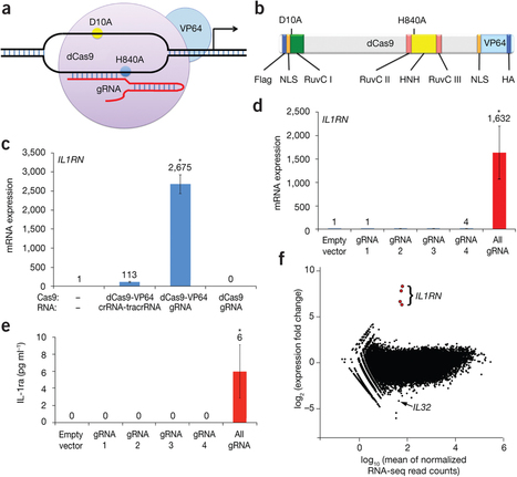 RNA-guided gene activation by CRISPR-Cas9–based transcription factors | CRISPR-Cas System for Eukaryotic Genome Engineering | Scoop.it