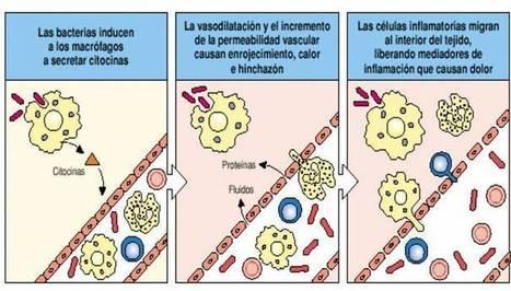clip_image002.jpg (712x405 pixels)   Respuesta inmune primaria y secundaria   Scoop.it