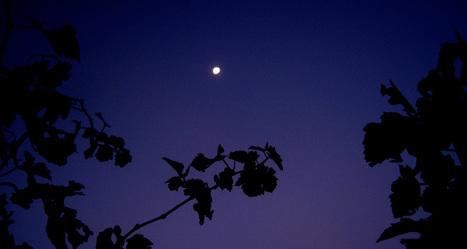Des vignes qui transpirent moins la nuit ! | Les colocs du jardin | Scoop.it