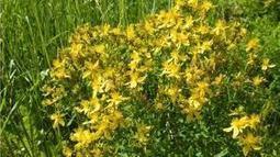 ΑΓΑΠΗ ΚΑΙ ΦΩΣ: Δύο Δώρα της Φύσης για να Βελτιώσετε τη Διάθεση σας....!!!   Natural issues   Scoop.it