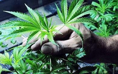 Man Pushing 80 Years Given Two Weeks To Live – Cured His ... | marijuana,cannabis | Scoop.it