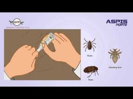 Parasites can be treated at home by easy steps | fleas and tick Control for dogs | Scoop.it