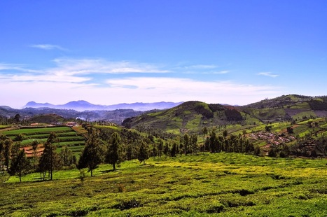 Top 5 Places to Visit in Kotagiri ~ World Information Online - Blogs on Latest Trends & Different Topics | Blog | Scoop.it