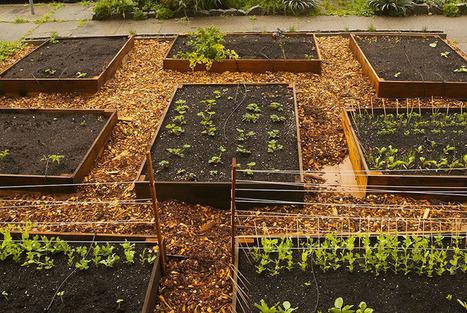 Il fait un potager bio hyper-productif sur 10 mètres carrés | Au jardin! | Scoop.it