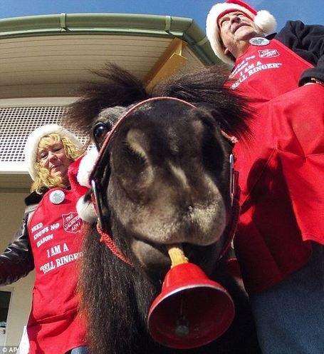 Bell ringing miniature horse in Wisconsin raking in money for the Salvation Army | Horse And Rider World | Scoop.it