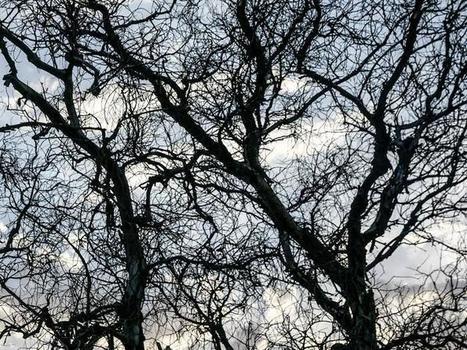 Los bosques necesitan varios años para recuperarse del impacto de las sequías | Sustain Our Earth | Scoop.it