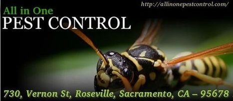 Termite Inspection Sacramento | All in One Pest Control | Scoop.it
