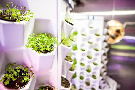 In the Kitchen at Moto - Saveur.com | Vertical Farm - Food Factory | Scoop.it