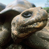Turtle Shells, Baboon Butts and More Mysteries Solved - Discovery News | Turtle Shells | Scoop.it