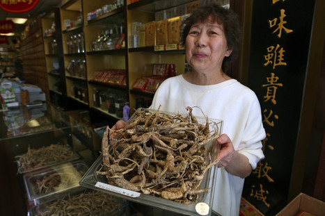 American ginseng has a loyal Chinese clientele   Anti-counterfeiting   Scoop.it