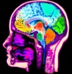 Launching A Neuroscience Startup: From MIT To Silicon Alley - Forbes | Start-Up Watch | Scoop.it