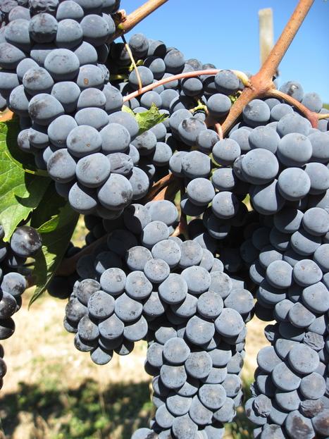 Vini naturali, biologici, biodinamici, questa moda ci ha veramente ...   Vino al Vino   Scoop.it
