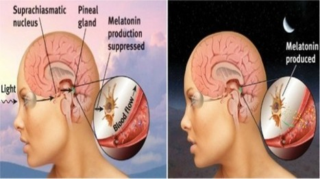 Melatonin Controlling the Balance between Th17 & Treg Cells | Neuro-Immune Regulatory Pathways | Scoop.it