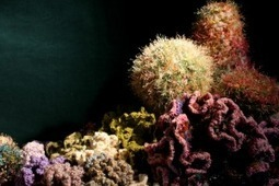 Crochet a Coral Reef - Washington and Lee University News Office (blog) | Knitting, Crochet and Other Fiber Art | Scoop.it