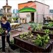Agricultura Urbana: Diseñando desde la distancia | Rpo... | Scoop.it